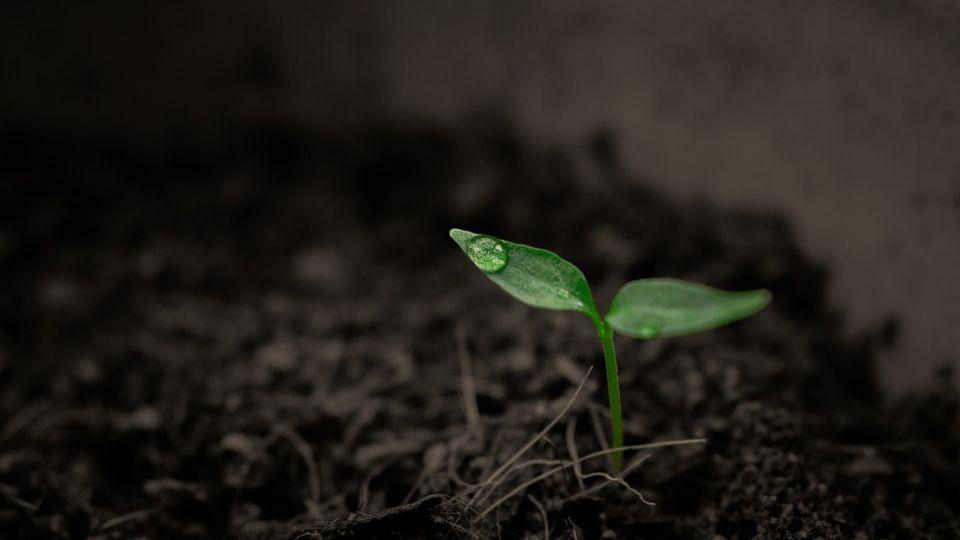 Магазин растениевода — GrowMarket