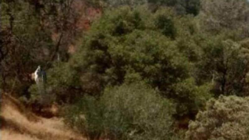 Девушка сфотографировала в кустах человекоподобное существо