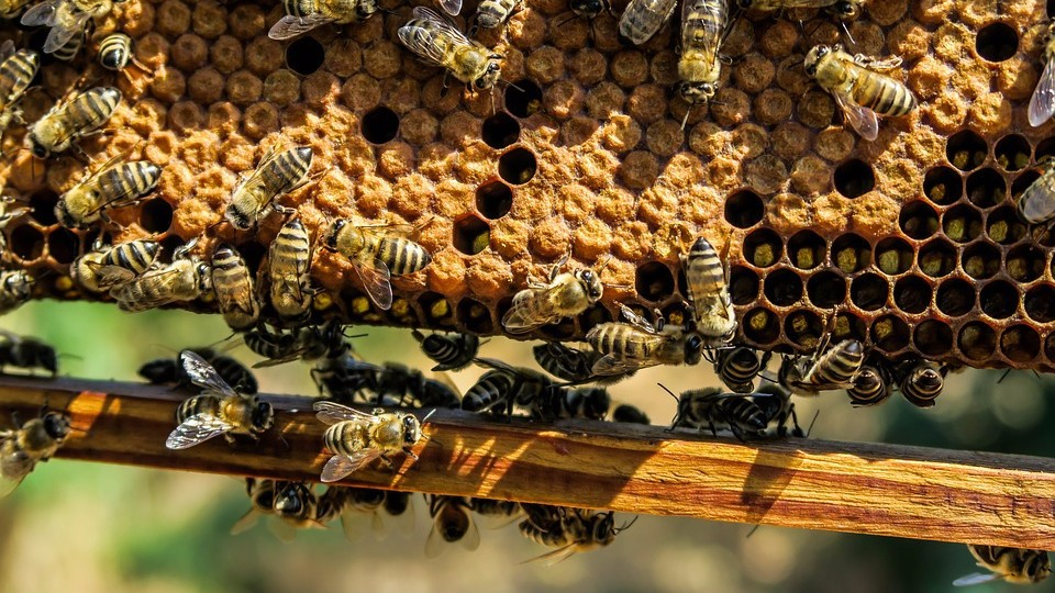 Пчеловодство: советы новичкам и где купить все необходимое