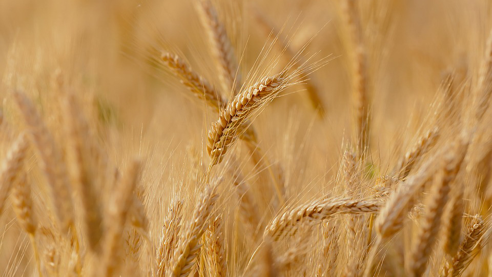Самобалансирующиеся рассевы — незаменимые помощники для сортировки зерноматериала