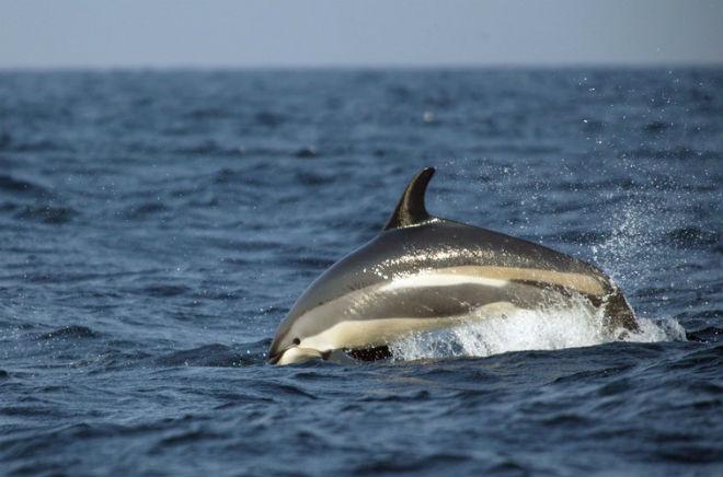 Ураган «Одиль» выбросил на побережье Мексики 11 дельфинов