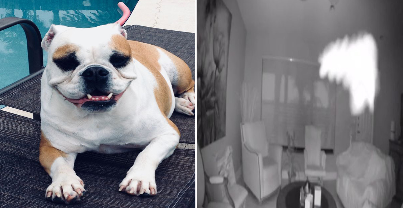 Камера видеонаблюдения запечатлела призрак умершей собаки: видео