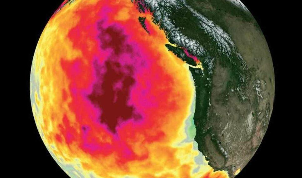 Огромный горячий пузырь в Тихом океане продолжает расти