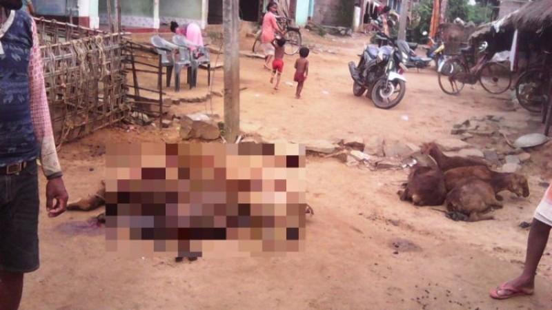 В Индии неизвестное существо распотрошило десять овец