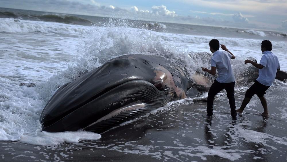 Фауна вымирает в 1000 раз быстрее, чем ожидалось. За полвека погибло 67% всех животных