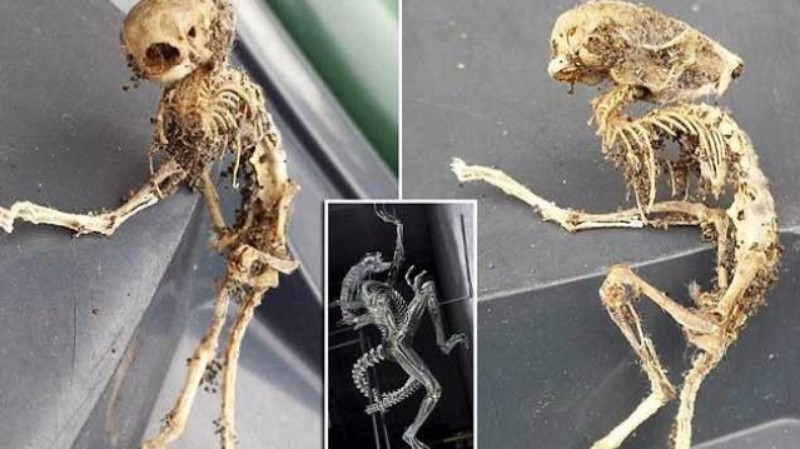 В Англии обнаружили останки существа, похожего на «чужого»