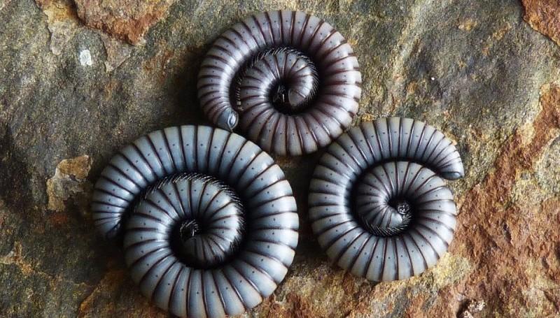 На Филиппинах обнаружили гигантских червей