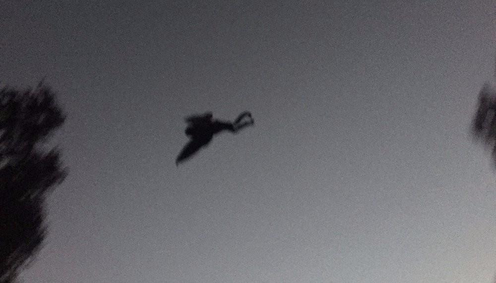 Человек-мотылек продолжает терроризировать Чикаго