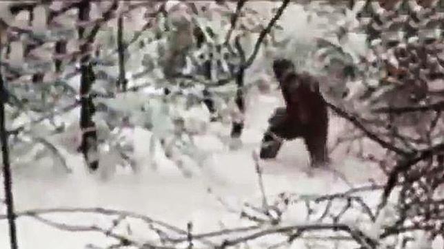 Группа русских туристов захватила лучшую видеозапись снежного человека