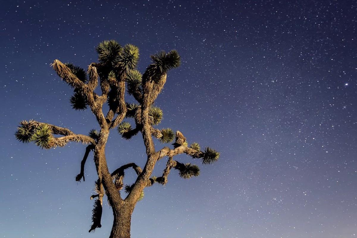 Метеорный поток Геминиды над Джошуа-Три