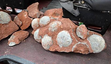 43 яйца динозавров обнаружены в Китае