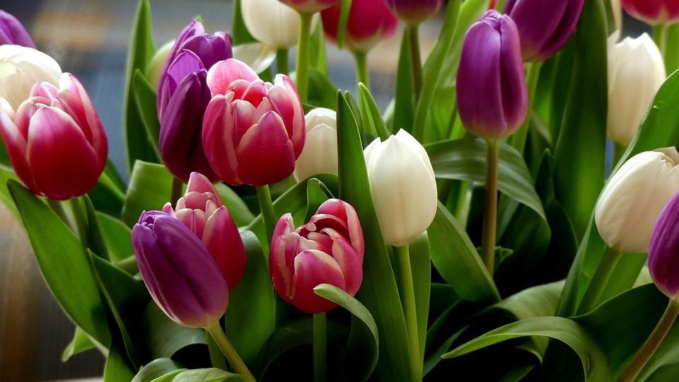 Когда нужна доставка тюльпанов