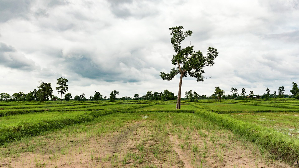 Можно ли купить земельные участки в Подмосковье недорого