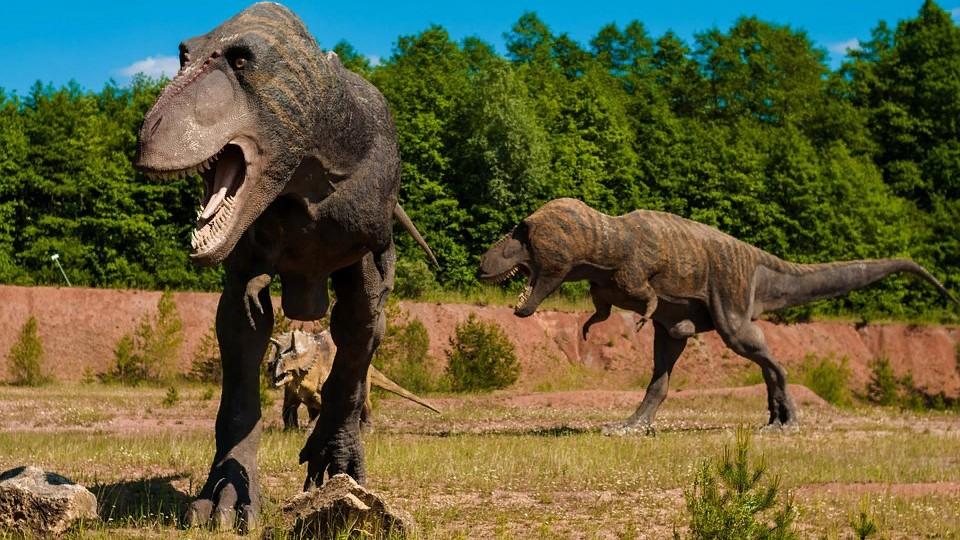 Гигантские следы динозавров обнаружены в Шотландии