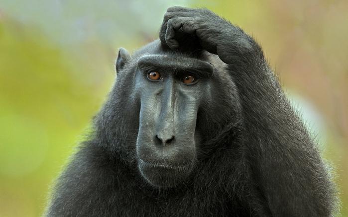 В Китае создали первых генно-модифицированных обезьян