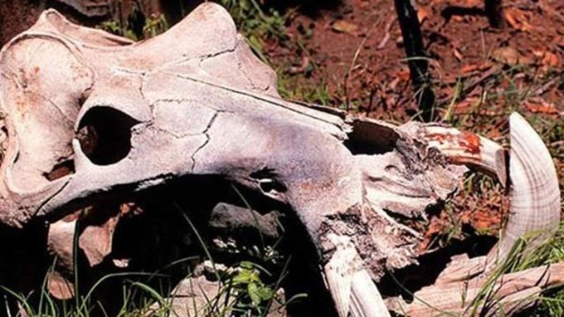 В Африке нашли череп дракона