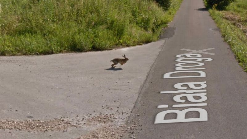 На панорамах Google Maps заметили высоко застывшего в воздухе зайца