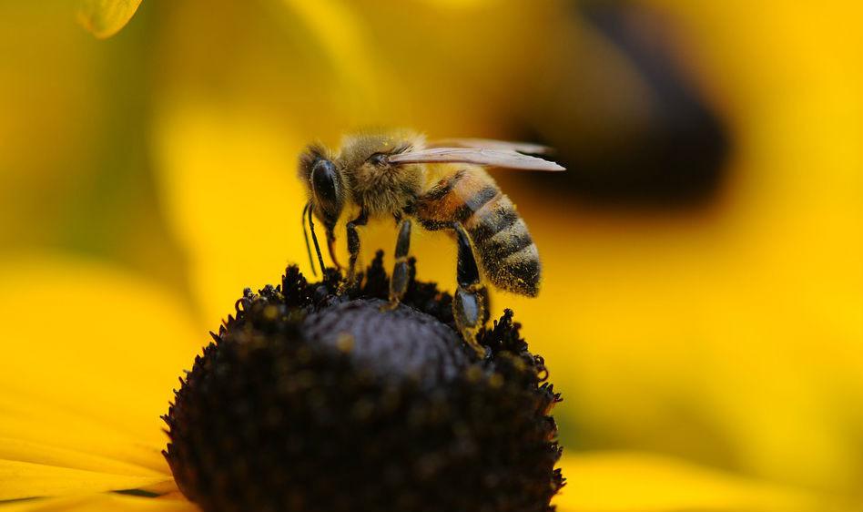 Американские власти в Южной Каролине убили более двух с половиной миллионов пчел