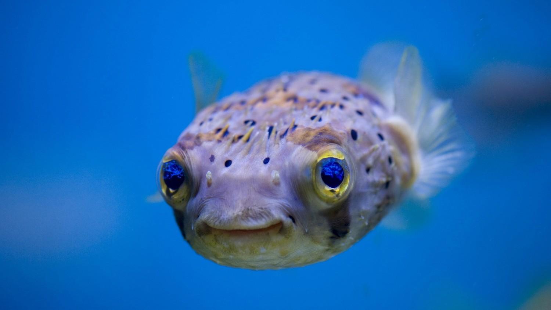 Ученые: рыбы способны дружить и чувствовать