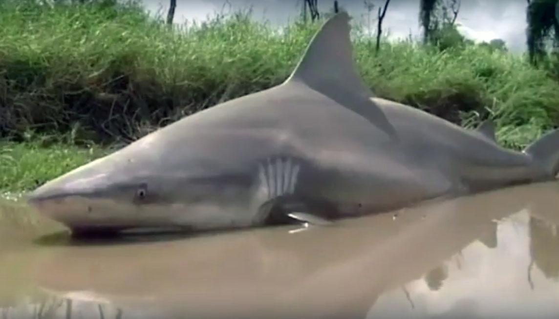 В Австралии ураган Дебби выкинул на дорогу акулу