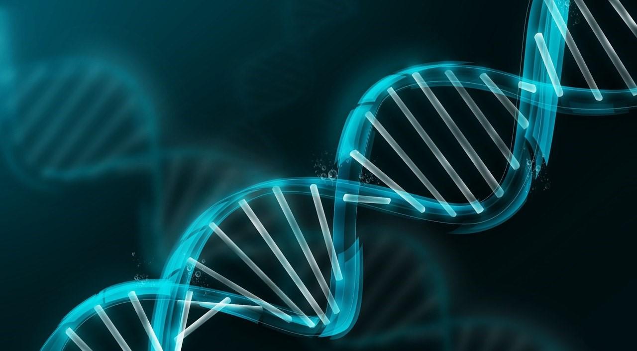 В США официально разрешили редактировать геном человека
