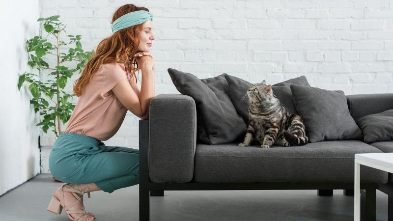 Как очистить диван от кошачьей мочи и избавиться от ее запаха