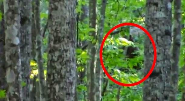 В лесу засняли йети (Видео)