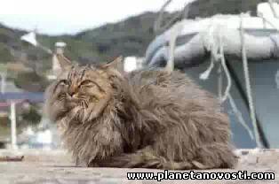 Пожилые японские супруги нашли кошку, пропавшую в день землетрясения в 2011 году