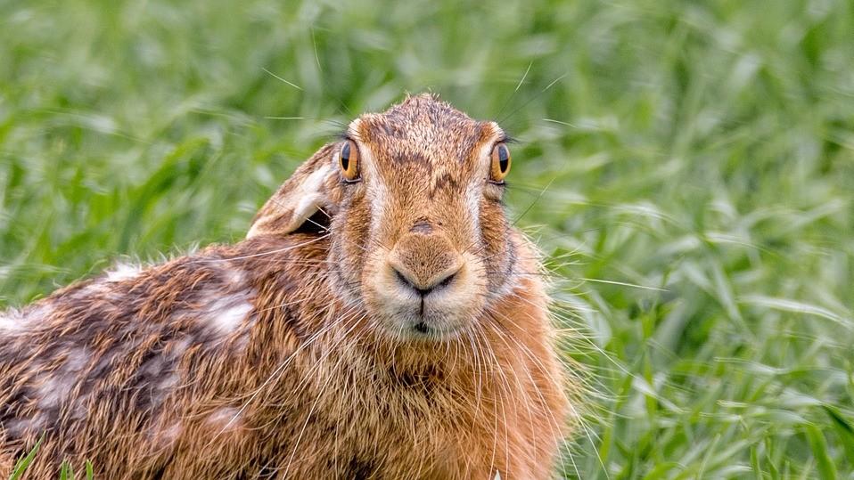 В США дикие животные начали вести себя странно