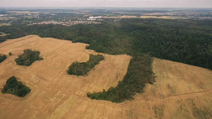 Последствия бури в Беларуси сравнивают с падением Тунгусского метеорита