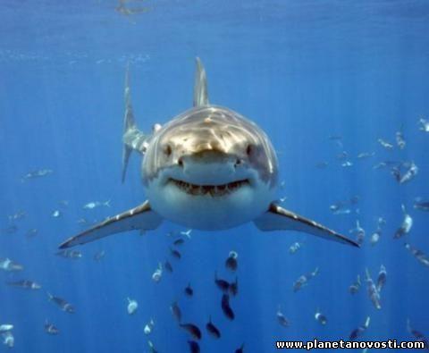 Власти Австралии произвели отлов 170 акул ради безопасности отдыхающих на пляжах