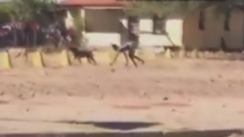 В ЮАР засняли на видео «получеловека-полусобаку»