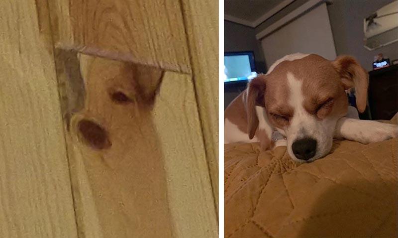 Хозяйка собаки заметила на деревянной стене идеальный портрет своего любимца