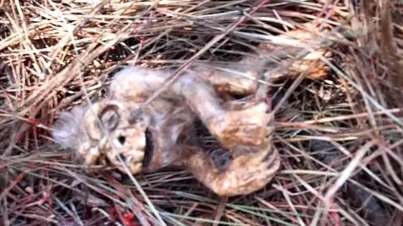 В Аризоне найден зародыш снежного человека