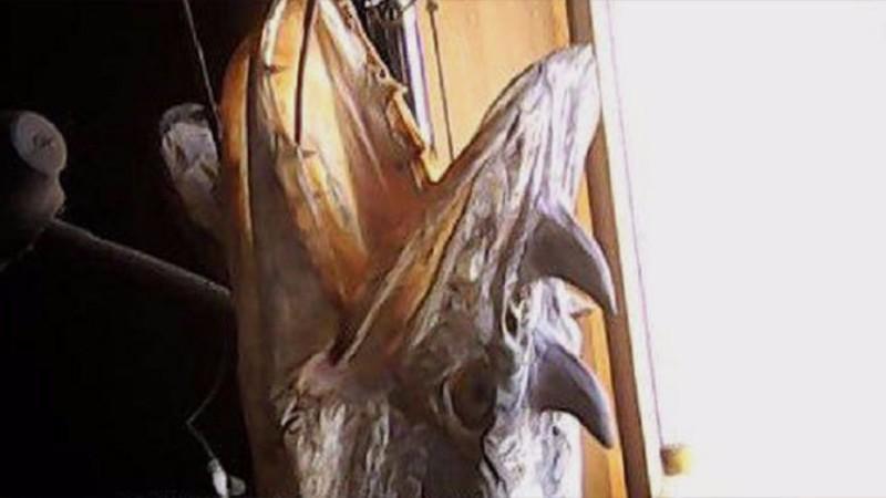 Ученый прокомментировал появление рогатых щук в водах Омской области
