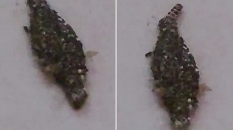 На видео засняли «настоящее инопланетное создание»