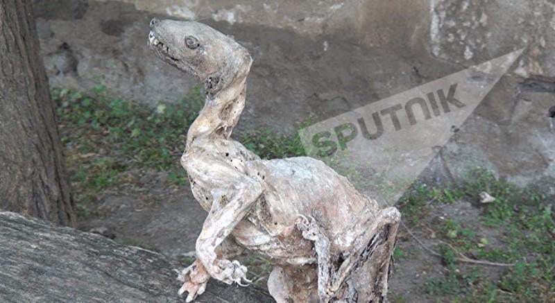 В Азербайджане найдена мумия чупакабры