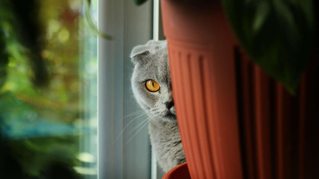 ЦРУ создало кошку-киборга, чтобы шпионить за Советским Союзом
