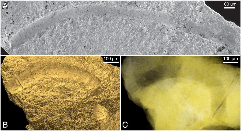В Индии обнаружили водоросли возрастом 1,6 млрд лет