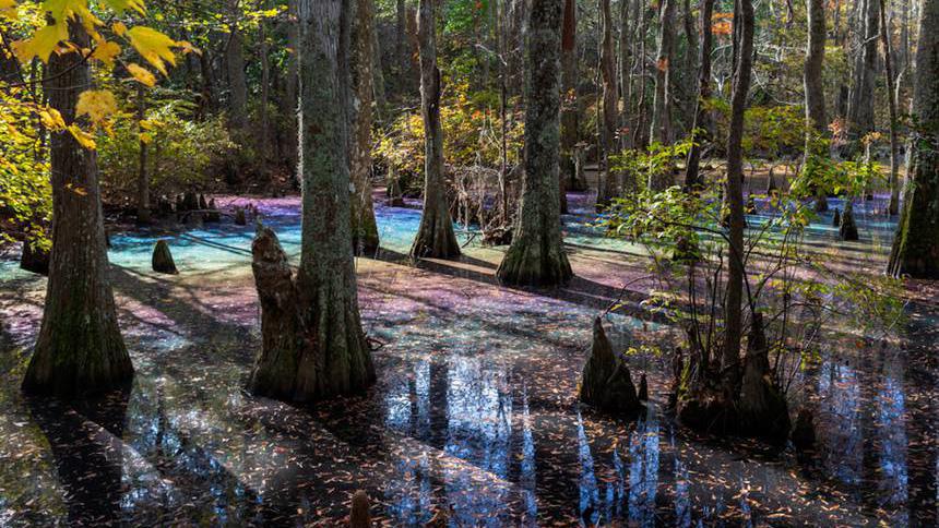 Радуга не в небе, а в воде: в Вирджинии засняли радужное болото
