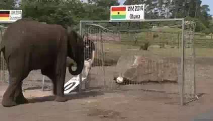 Итоги чемпионата мира по футболу 2014 предсказала слониха