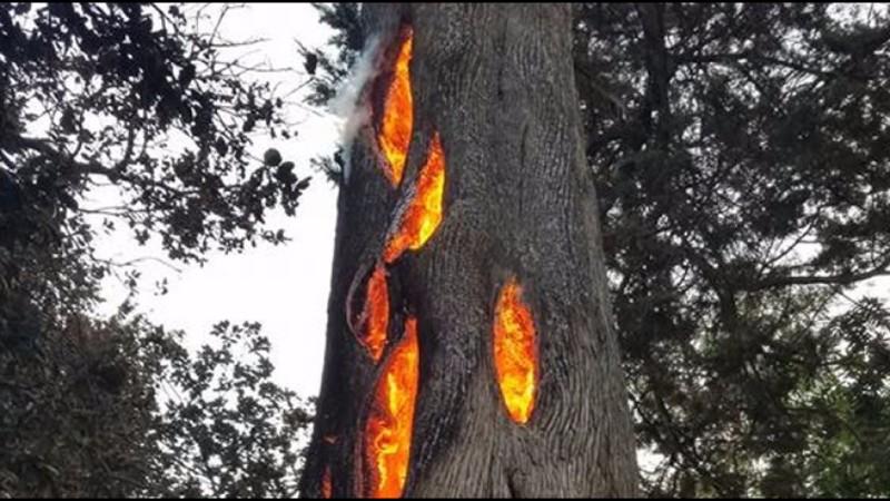 В Малайзии по каким-то причинам деревья горят изнутри