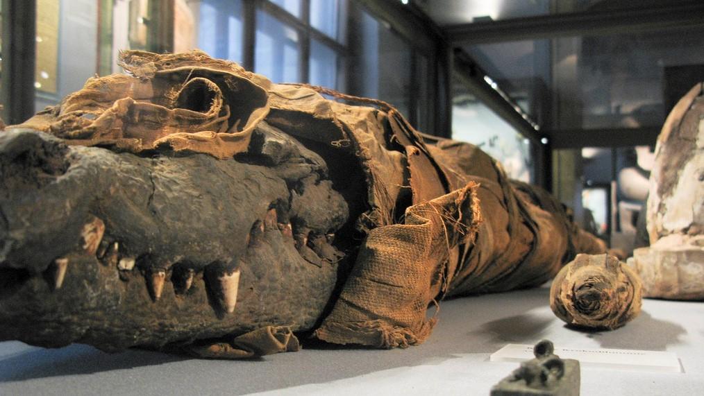Археологи обнаружили четырехметровую мумию египетского бога Себека