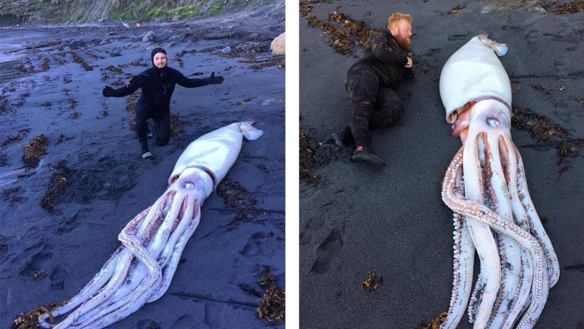 Обнаружен самый большой кальмар на Земле