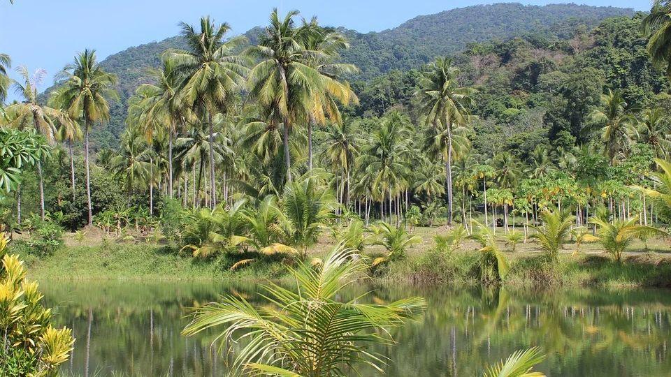 Амазонка начала нагревать атмосферу Земли, а не охлаждать ее
