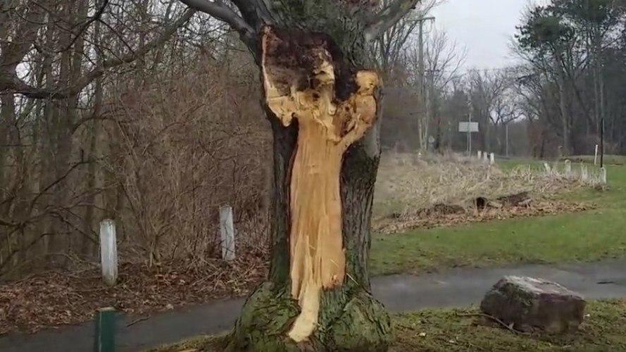 В США призрак «Белой леди» отобразился на дереве