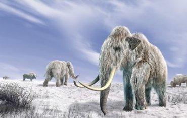 Мамонтов съели древние люди – ученые
