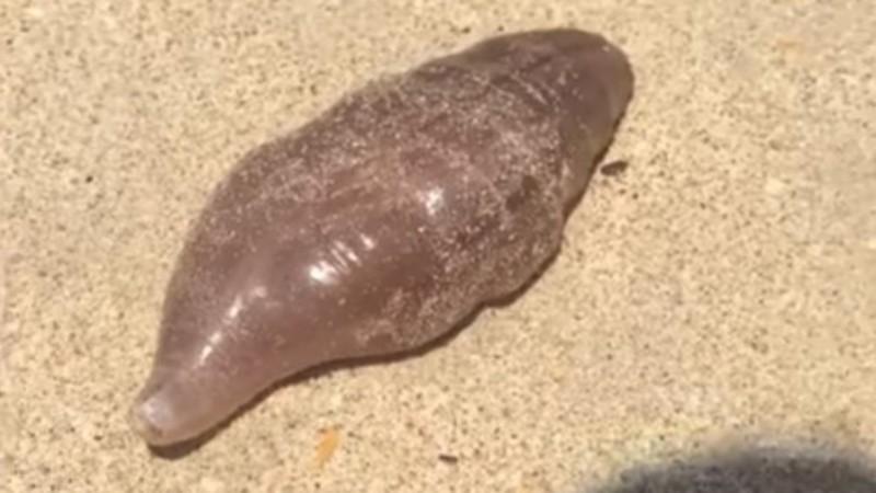 На таиландский пляж вымыло загадочных существ