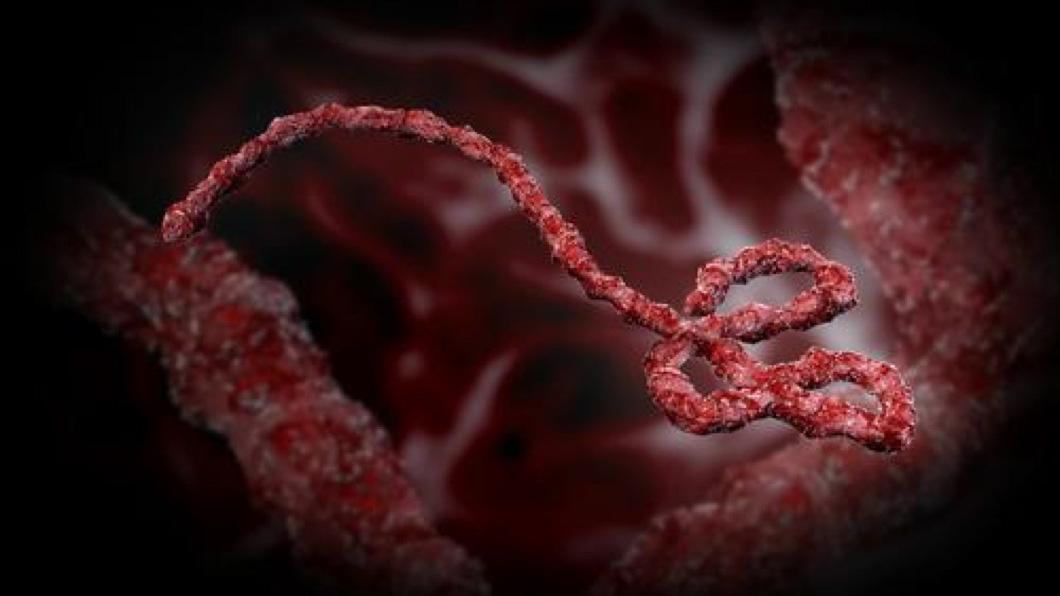 В Северную Америку и Европу направляется вирус Эбола