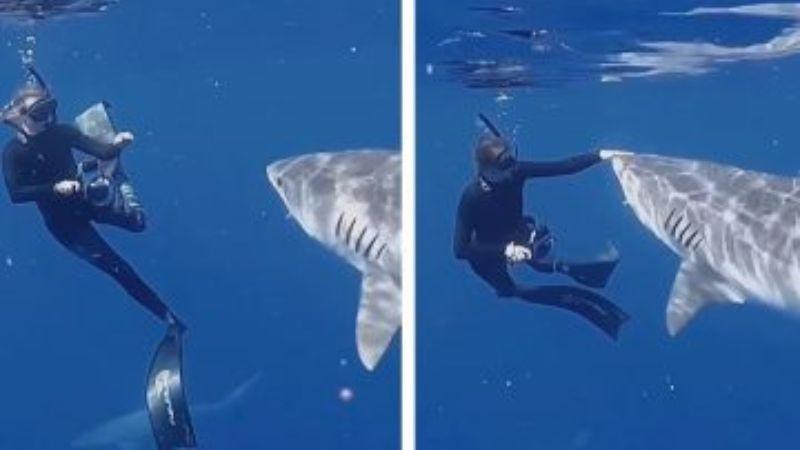 Морской биолог показала, как отбиваться от акулы, если вы столкнулись с ней лицом к лицу